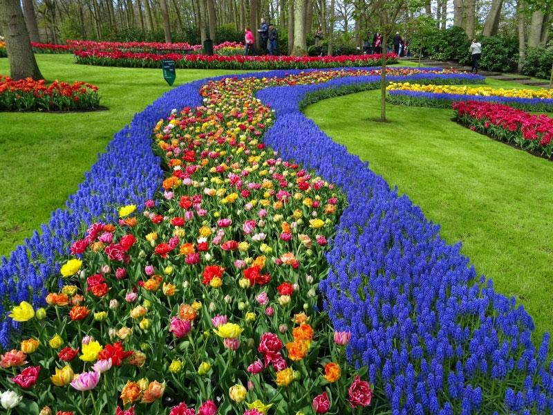 Flowering Divides