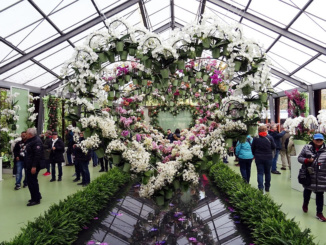 Continuous Orchid Hearts Beatrix