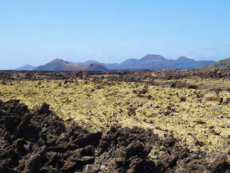 Lava fields with moss.