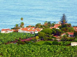 Banana farm on the coastline of Tenerife.