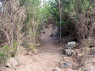 The walking path to the cave is covered in pine needles and tall grasses.