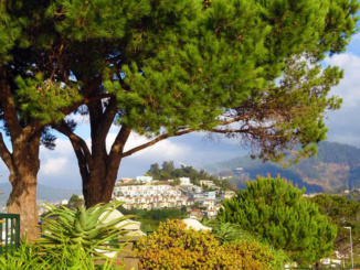 A look at Funchal from the Pico dos Barcelos overlook.