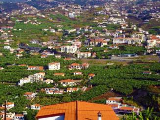 Banana fields in Funchal.