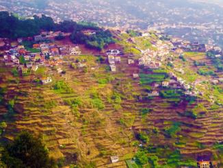 Terraced fields in Funchal.