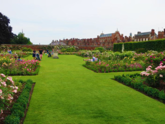 The Rose Garden which was formerly the Kitchen Garden during the reign of William III