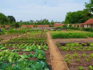 The Royal Kitchen Garden