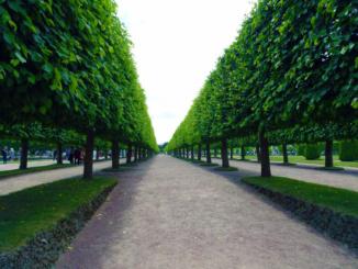 A great view of the fabulous gardens surrounding Peterhof