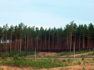 The dense forest of the Gauja National Park covers over 354 sq miles of Northeast Latvia